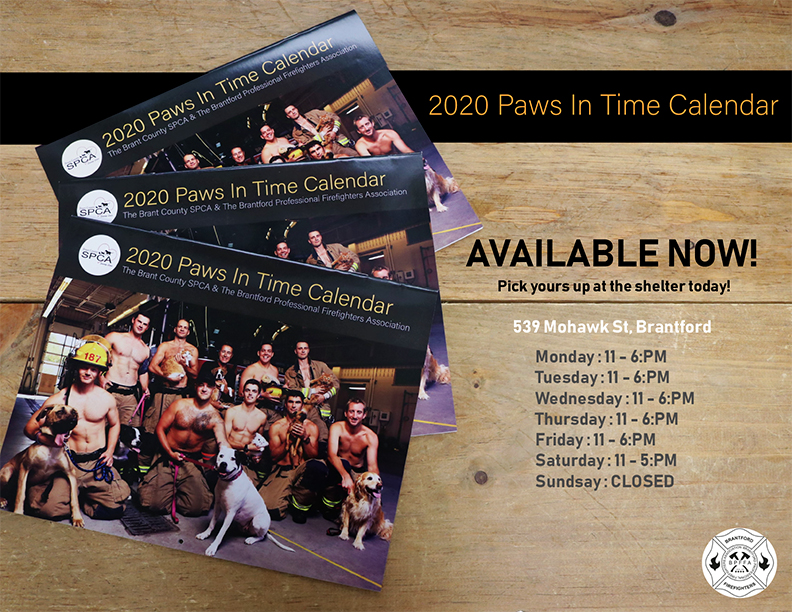 Paws in Time 2020 Calendar image