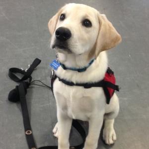 Autism Dog Services - Cute Dog