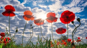 Remembrance Day Services 2020