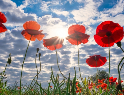 City of Brantford Announces Modified Plans for Remembrance Day 2020